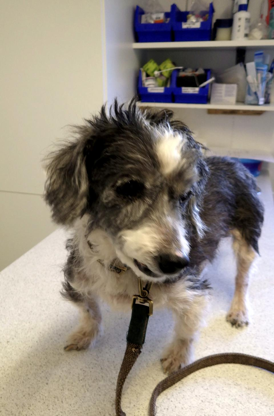 Terrier Dudley was found suffering from dental issues, skin disease and dry eye. (SWNS)