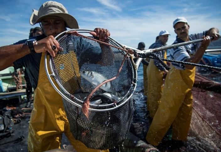 """Fishermen say they are paying for the """"mistakes of our fathers"""", with no fish stock left in the sea (AFP Photo/FADEL SENNA)"""
