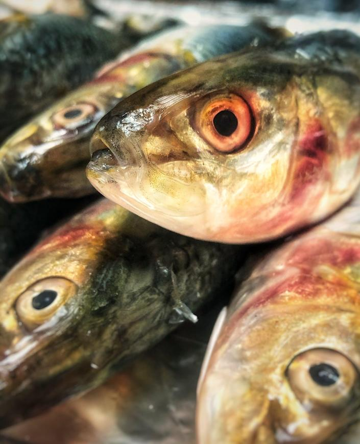 """<span class=""""caption"""">Sardines are rich in oils and protein.</span> <span class=""""attribution""""><a class=""""link rapid-noclick-resp"""" href=""""https://unsplash.com/photos/9I3aLTYnWa4"""" rel=""""nofollow noopener"""" target=""""_blank"""" data-ylk=""""slk:Photo by Ahmed Nadar for Unsplash"""">Photo by Ahmed Nadar for Unsplash</a>, <a class=""""link rapid-noclick-resp"""" href=""""http://creativecommons.org/licenses/by-nd/4.0/"""" rel=""""nofollow noopener"""" target=""""_blank"""" data-ylk=""""slk:CC BY-ND"""">CC BY-ND</a></span>"""