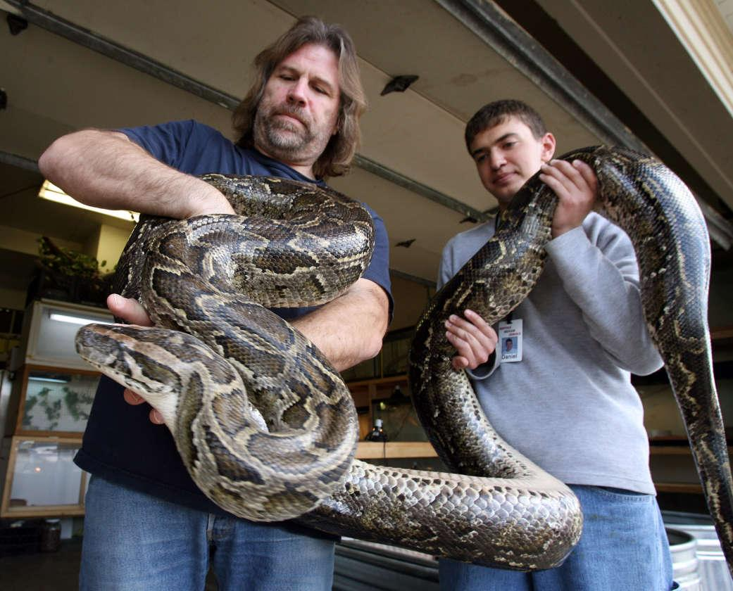 In this April 18, 2006 photo, Jim Dix, left, and volunteer Daniel Ader hold a female Burmese Python at Reptile Rescue Service in West Valley City, Utah. Utah transportation officials are trying to evict a reptile rescuer who's using his rental home as a shelter for hundreds of animals, Wednesday, Oct. 12, 2011. (AP Photo/The Deseret News, Ravell Call) SALT LAKE TRIBUNE OUT; PROVO DAILY HERALD OUT; MAGS OUT