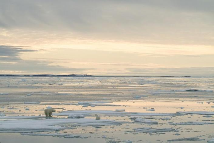 Global warming, which reduces the part of the Arctic Ocean that is permanently covered by ice, puts at risk species such as polar bears