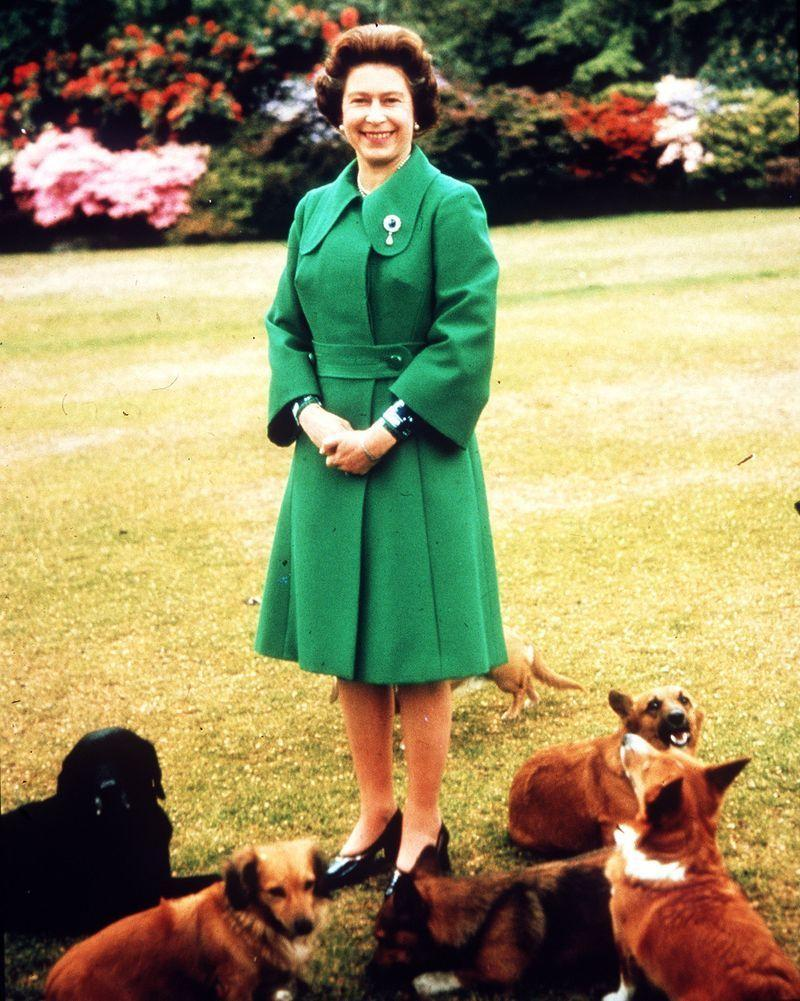 """<p>Per the <em>Telegraph</em>, the Queen ended up <a href=""""https://www.telegraph.co.uk/news/2018/04/17/queen-devastated-loss-last-remaining-corgi/"""" rel=""""nofollow noopener"""" target=""""_blank"""" data-ylk=""""slk:breeding over 30 corgis from Susan's line"""" class=""""link rapid-noclick-resp"""">breeding over 30 corgis from Susan's line</a>, beginning with her two pups Sugar and Honey, both born in 1949. The lineage stretched on for 14 generations.</p>"""