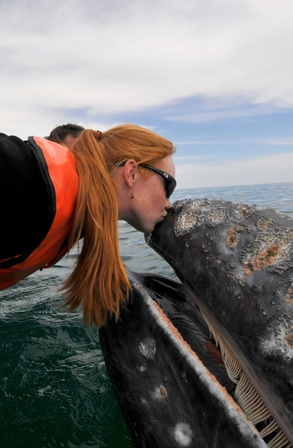 Delighted tourist gets a kiss from a 30-tonne gray whale