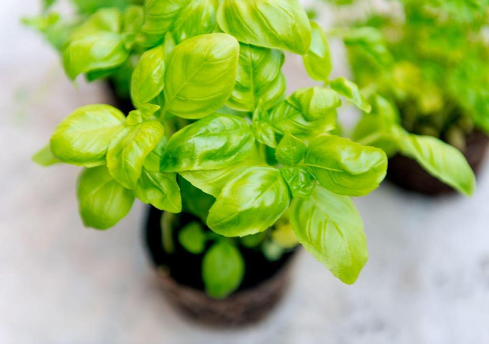 """<p>Basil is loaded with polyphenols, which are beneficial in soothing chronic pain associated with <a href=""""https://www.prevention.com/health/health-conditions/a19840908/rheumatoid-arthritis-symptoms/"""" rel=""""nofollow noopener"""" target=""""_blank"""" data-ylk=""""slk:arthritis"""" class=""""link rapid-noclick-resp"""">arthritis</a>, and even help protect your liver, brain, and heart, according to Mirkin. </p><p><strong>Try it: </strong>Perk up your salad or pasta dish with a sprinkle of minced basil, or whip up some <a href=""""https://www.prevention.com/food-nutrition/recipes/a22037883/turkey-panini-strawberry-pesto/"""" rel=""""nofollow noopener"""" target=""""_blank"""" data-ylk=""""slk:strawberry pesto"""" class=""""link rapid-noclick-resp"""">strawberry pesto</a> to spread on a sandwich.</p>"""