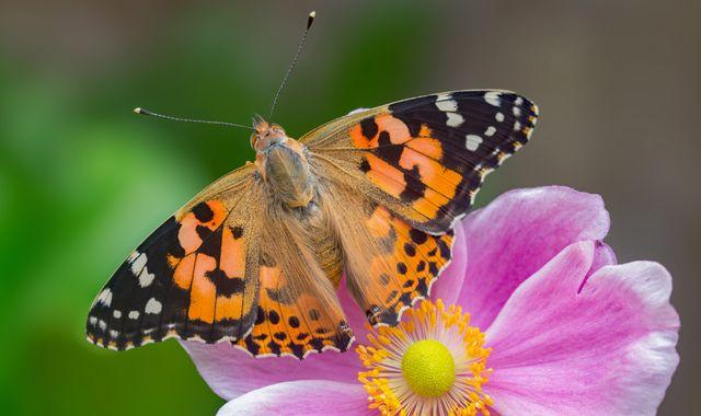 Butterfly numbers lowest on record as experts warn of 'perilous' state of UK wildlife