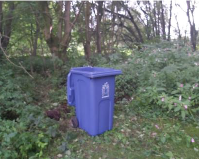 Pictured is a blue wheelie been among forest greenery.