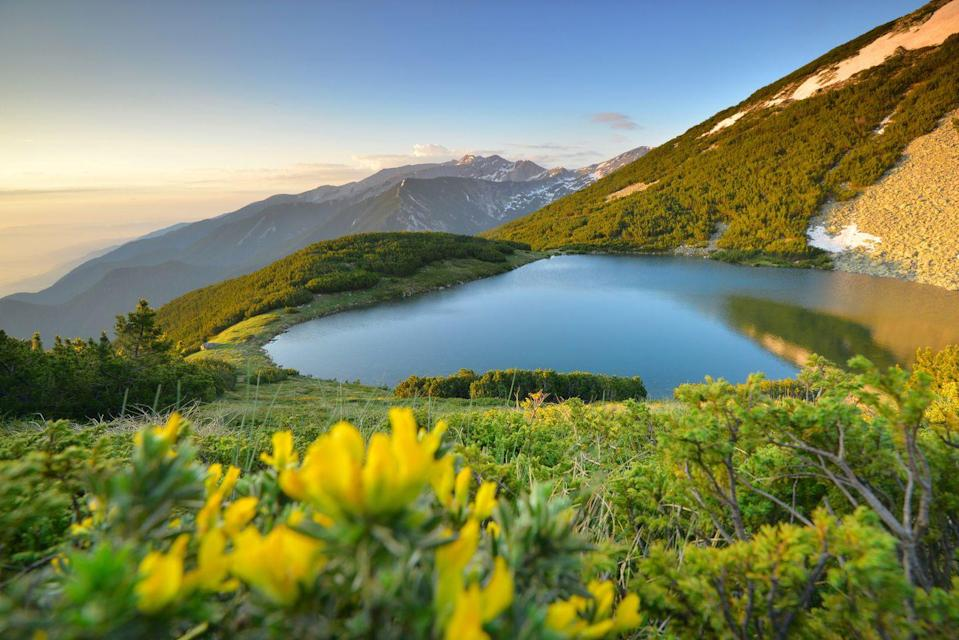 <p>Wildflowers blooming over a mountain lake in Pirin Mountain National Park, Bulgaria. </p>