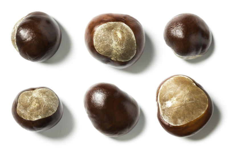 brown conkers on white background