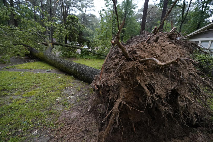Exposed roots of this fallen tree show the ferocity of winds that struck Jackson, Miss., Tuesday, May 4, 2021. The fallen tree was one of many that left thousands of central Mississippians without power. The severe weather was not unexpected, since the state was hit with a number of tornadoes on Sunday. (AP Photo/Rogelio V. Solis)