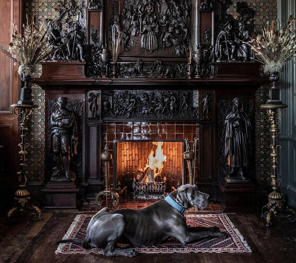 """<p>A stately stay for animals that like to rule the roost (and the mantel), the Fife Arms in the Highland town of Braemar has a series of dog-friendly rooms on its first floor. Animals are allowed almost everywhere – bar the Clunie Dining Room at mealtimes. For peak post-walk pampering, dogs are given special robes to dry off in – and if all the Highland tweed and classic country style has them feeling envious, the hotel's online shop will come to the rescue with dapper collars and coats.</p><p>For more information, visit t<a href=""""https://thefifearms.com/"""" rel=""""nofollow noopener"""" target=""""_blank"""" data-ylk=""""slk:hefifearms.com"""" class=""""link rapid-noclick-resp"""">hefifearms.com</a>.</p>"""