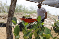 A man pushes a wheelbarrow at a Planting Life site, a jobs and reforestation program promoted by Mexican President Andres Manuel Lopez Obrador, in Kopoma, Yucatan state, Mexico, Thursday, April 22, 2021. President Lopez Obrador is making a strong push for his oft-questioned tree-planting program, trying to get the United States to help fund expansion of the program into Central America as a way to stem migration. (AP Photo/Martin Zetina)
