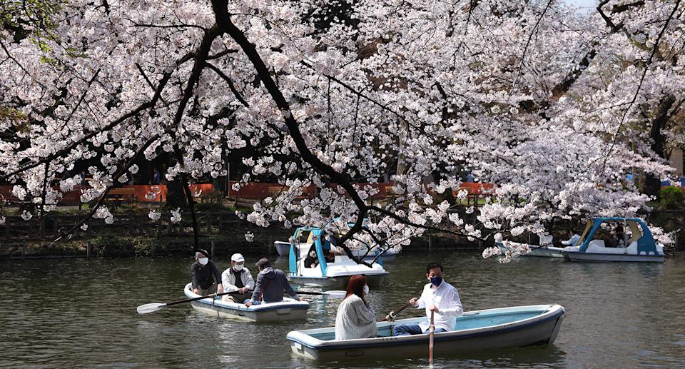 Visitors of Inokashira Park enjoy boating during Cherry blossom viewing (Hanami) season marked by Covid-19 pandemic. Hanami (Japanese custom for viewing the beauty of flowers) picnics have been prohibited inside Inokashira park as an effort to curb the spread of the Covid19 (coronavirus) disease. (Photo by Stanislav Kogiku / SOPA Images/Sipa USA)