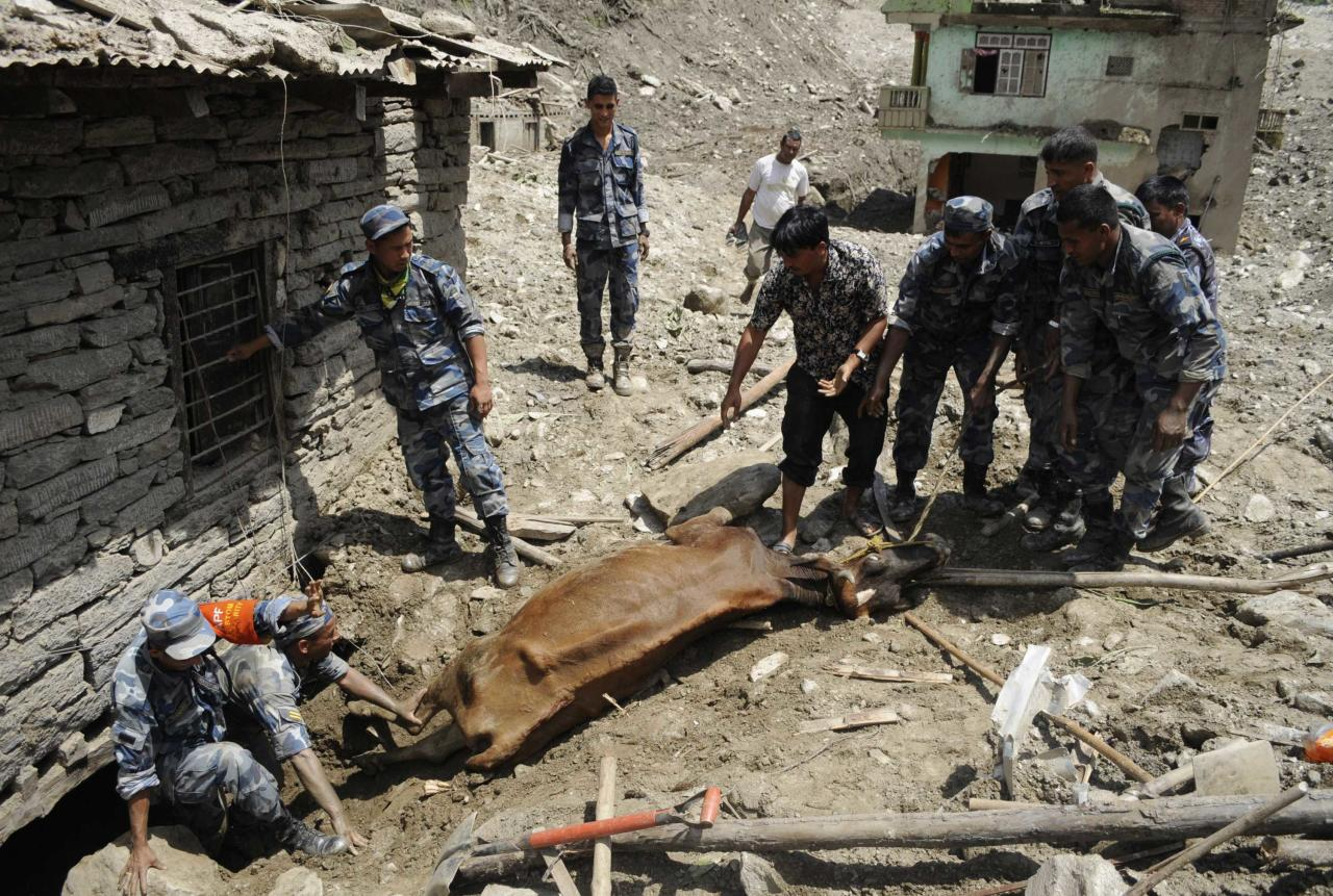 A rescue team from the Armed Police Force rescues a cow from a house in the landslide area in Sindhupalchowk district August 2, 2014. A massive landslide triggered by heavy rains in northeast Nepal on Saturday has killed at least eight people, injured 40 and buried dozens of homes, officials said. The landslide created a mud dam blocking the Sunkoshi River near Jure in the Sindhupalchowk district, about 60 kms (37 miles) northeast of Kathmandu, heightening fears of downstream floods that could reach as far as Bihar in eastern India. REUTERS/Dipesh Shrestha (NEPAL - Tags: DISASTER ENVIRONMENT ANIMALS) NO SALES. NO ARCHIVES