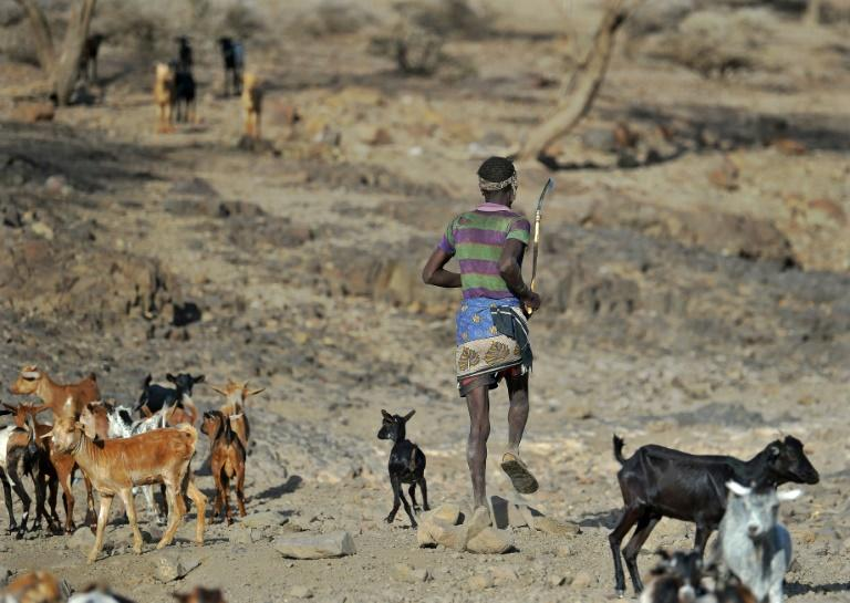 The end of March is supposed to bring rains transforming the barren plains in Kenya's Kibish region into pasture, but so far there have been none