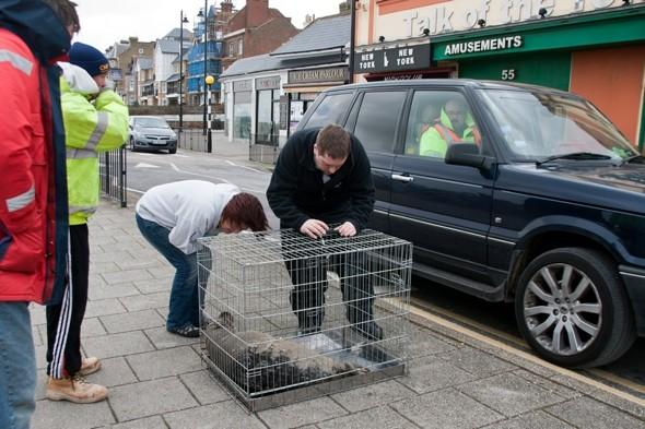 Baby seal escapes stormy sea and crosses busy road to nightclub in Herne Bay