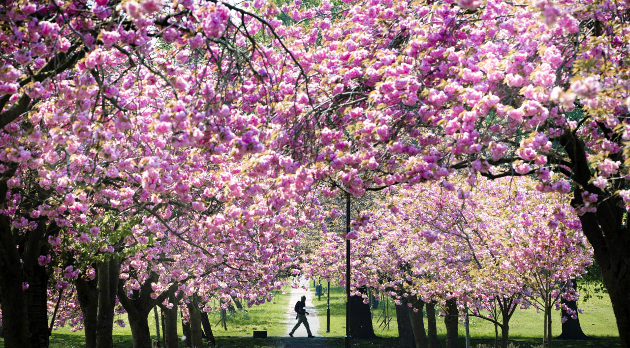 <p>Britons heading back to work after the hottest early May Bank Holiday weekend on record will enjoy the sweltering temperatures for one more day before the mercury dips. (Danny Lawson/PA Wire) </p>