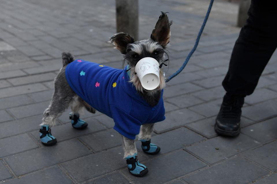 TOPSHOT - A dog wears a paper cup over its mouth on a street in Beijing on February 4, 2020. - The number of total infections in China's coronavirus outbreak has passed 20,400 nationwide with 3,235 new cases confirmed, the National Health Commission said on February 4. (Photo by GREG BAKER / AFP) (Photo by GREG BAKER/AFP via Getty Images)