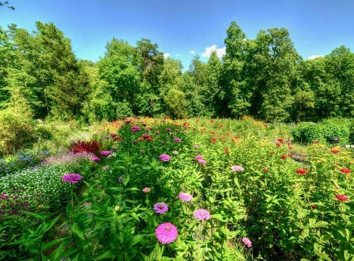 Fernrock Farm in Hillsborough is a cut flower farm and is a woman-owned business. Visitors can reserve a time to cut flowers to bring home June through September.