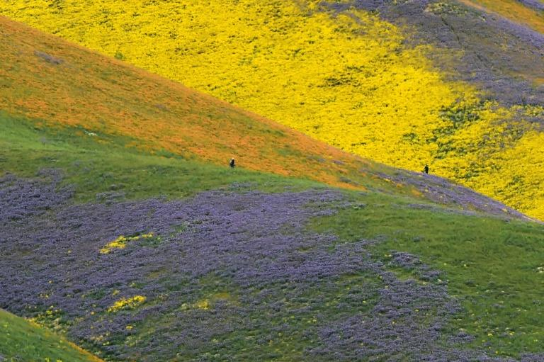 Carrizo Plain was declared a national monument in 2001 under the Antiquities Act, a decision now under review by the Trump administration
