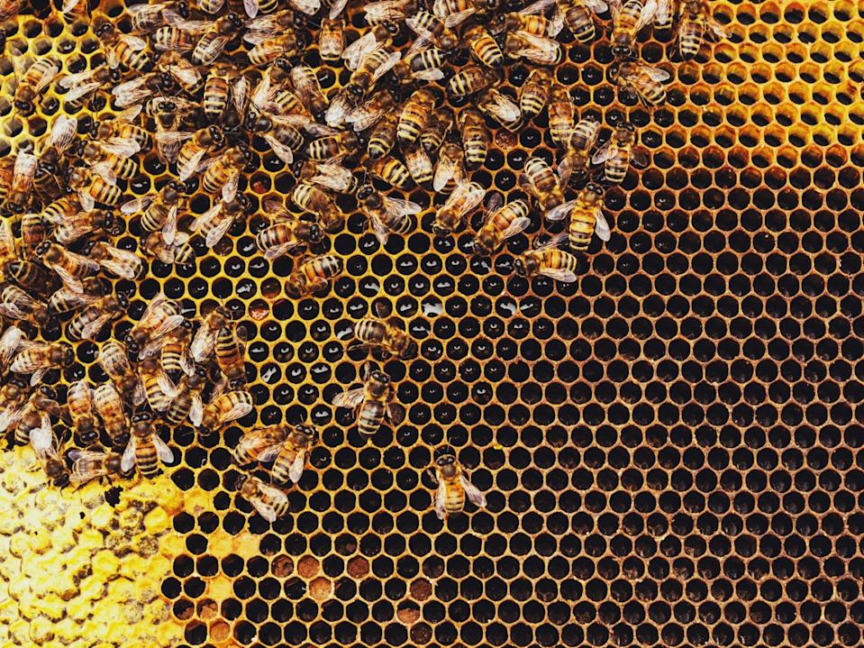 <p>Honeybees' pollination services are estimated to be in the region of $30bn a year</p> (Getty)