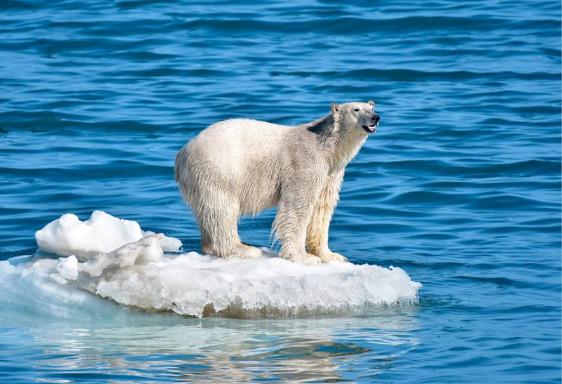 CHUKOTKA AUTONOMOUS AREA, RUSSIA - JULY 12, 2019: A polar bear by Wrangel Island. Yuri Smityuk/TASS (Photo by Yuri Smityuk\TASS via Getty Images)