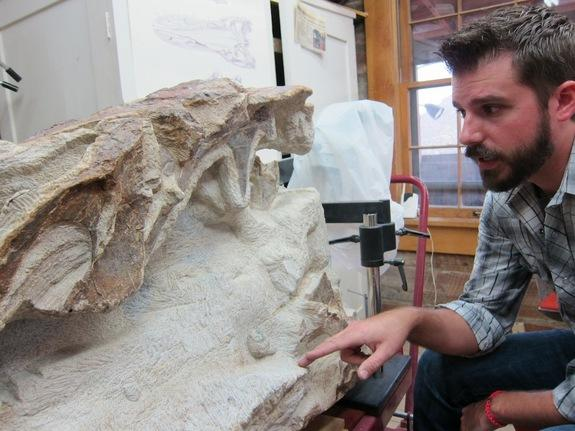 "Morrison Natural History Musuem director Matthew Mossbrucker with ""Kevin,"" a new <i>Apatosaurus</i> specimen found near Denver, Colo."