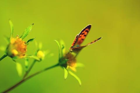 Around 200 species of spectacularly colourful butterflies are native to Croatia - Credit: getty