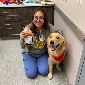 Canine Blood Donor