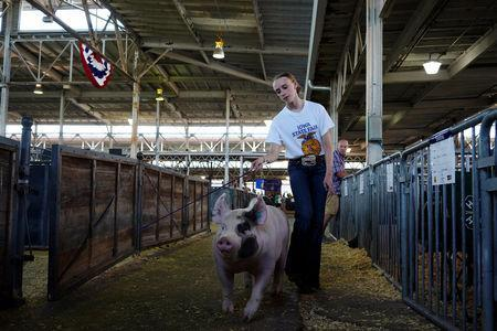 FILE PHOTO: Reagan Gibson, 15, of Panora, walks with a pig at the Iowa State Fair in Des Moines, Iowa, U.S., August 9, 2018. REUTERS/KC McGinnis/File Photo