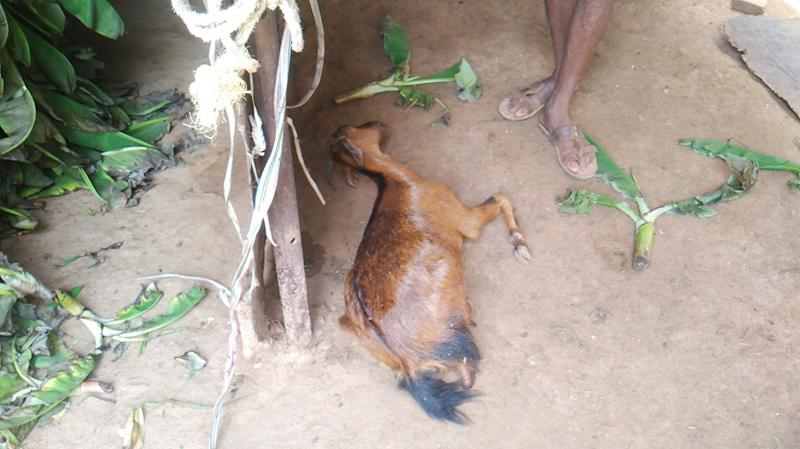 Death of livestock continues to be a reason for distress among the villagers