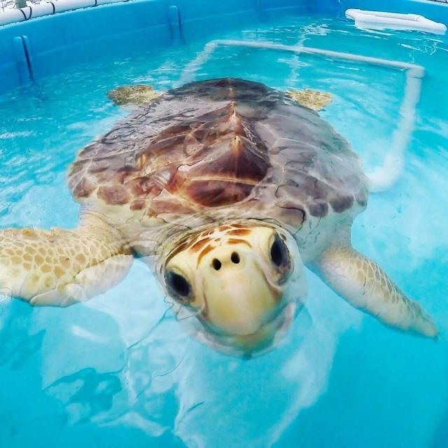 The Turtle Hospital is the world's first licensed veterinarian hospital dedicated entirely to serving turtles. (Turtle Hospital/Facebook)