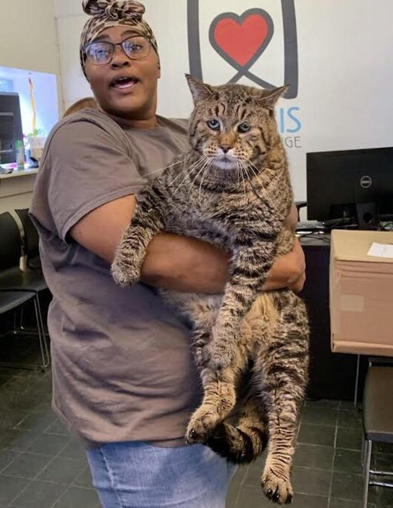 "A Morris Animal shelter employee holds ""Mr B"" or ""Chonk"" in the hope to find him a forever home."
