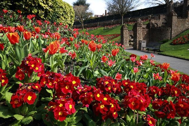 Spring flowers surround Guildford Castle in Surrey