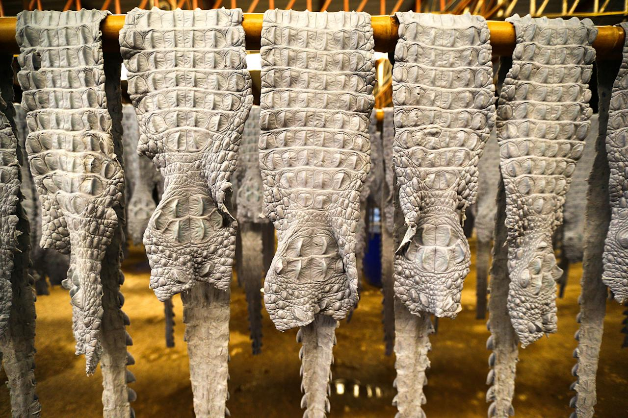 <p>Dyed crocodile skins hang at a crocodile leather tannery in Samut Prakan province, Thailand, May 24, 2017. (Photo: Athit Perawongmetha/Reuters) </p>