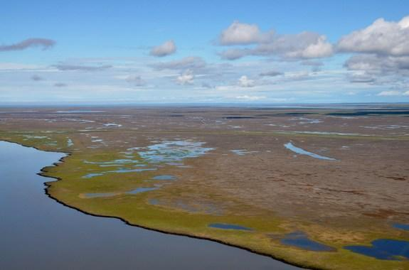 The stark contrast between dead vegetation killed by a 1999 storm surge in the Mackenzie River delta, and vegetation along the edges of waterways that receives regular freshwater (and thus survived the damage).