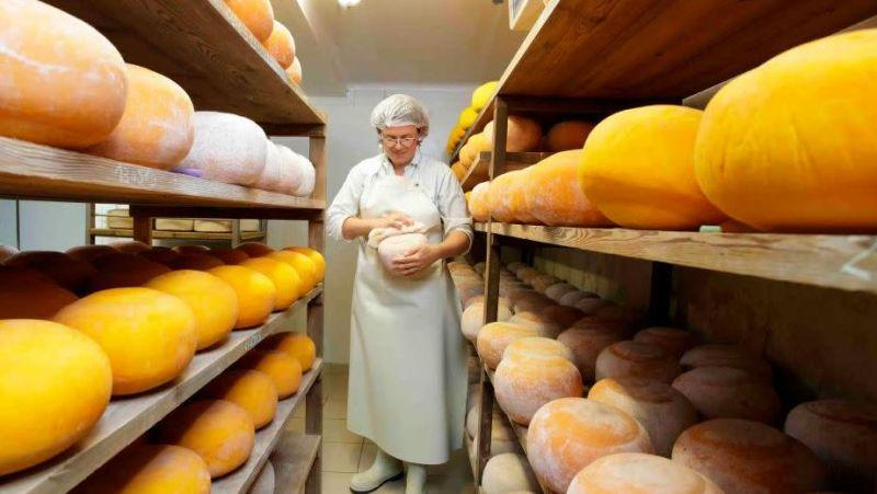 Woman wearing apron and hairnet standing in rows of fresh cheese