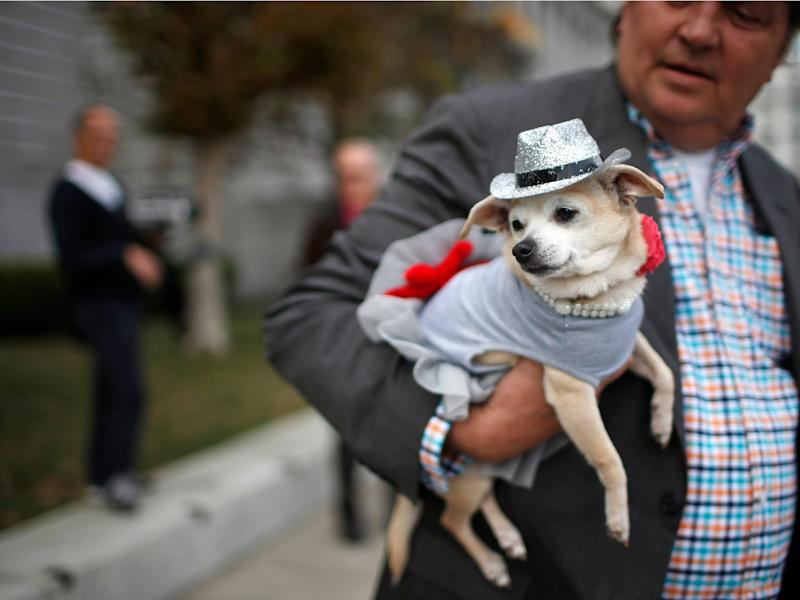 Frida, a female Chihuahua, rests in the arms of her owner, Dean Clark, outside City Hall before the San Francisco Board of Supervisors issued a special commendation naming Frida