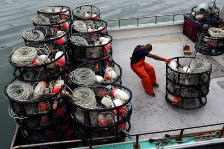 A fisherman loads crab pots onto a fishing vessel at Fishermen's Wharf ahead of the opening of the commercial Dungeness crab season, in San Francisco, California, U.S. November 14, 2013. REUTERS/Robert Galbraith/File Photo