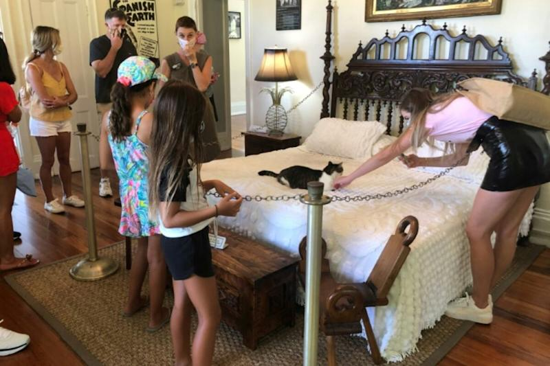Hemingway's Cats: Six-toed Felines Guide Tourists at Writer's Florida Home as Covid-19 Lays Off Staff