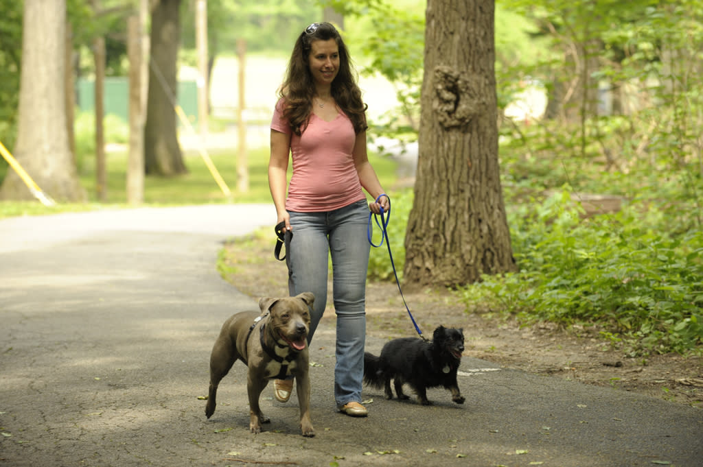 "Dog guru Justin Silver doubles as a couple's counselor when a newly engaged woman relays her fear that her small antagonistic dog may get wounded by her husband-to-be's two large dogs, on ""Dogs in the City."""