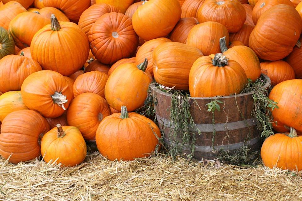 <p>Okay, okay, it might be a bit clichéd, but it's beloved for a reason: spending the day at the pumpkin patch is an undeniably perfect way to enjoy a fall afternoon.</p>