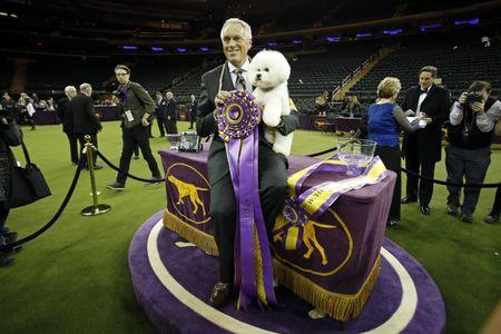 Feb 13, 2018; New York, NY, USA; Flynn, a Bichon Frise, with handler Bill McFadden after winning the best in show for the 142nd Annual Westminster Kennel Club Dog Show at Madison Square Garden. Mandatory Credit: Adam Hunger-USA TODAY Sports