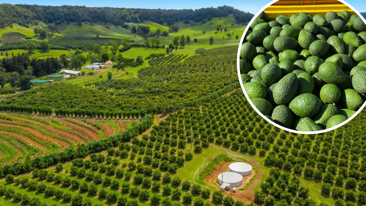 Just sold: Inside $14 million farm with 14,000 avocado trees