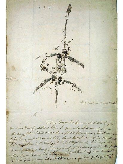 Mary Anning's letter, with an accurate drawing, of her first amazing find: a complete Plesiosaurus dolichodeirus