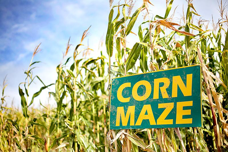 3-Year-Old Boy Left Behind in a Utah Corn Maze, Mom Realizes the Next Day