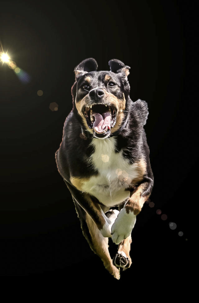 "<p>Peter said: ""The idea for flying dogs came to me spontaneously."" (Photo: Peter Mueller/Caters News) </p>"