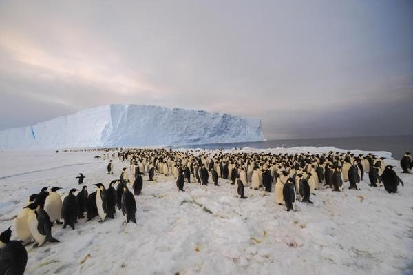The newly-discovered 9,000-strong emperor penguin colony on the East Antarctic coast.