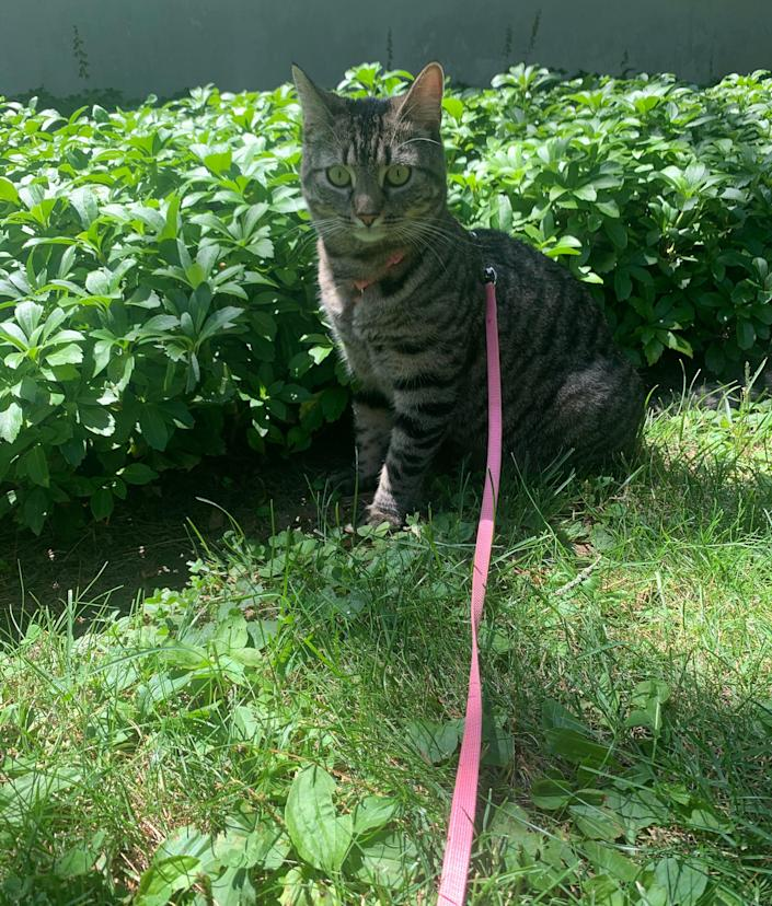 Cielo is reporter Micaela Hood's one-year old tabby mix.