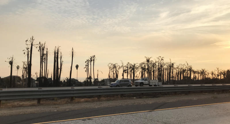 Burned palm trees at a tree farm on the shoreline at Faria Beach. (Matt Ferner / HuffPost)