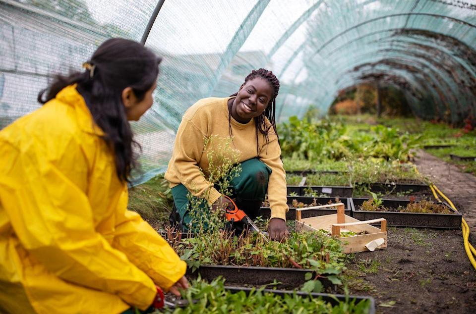 <p>Spending time in a garden is one of the best parts of springs if you are into growing your own flowers, fruits, or vegetables. If you don't have space at home, though, volunteering at a local community garden is a great way to give back to your neighbors and spend some time with your hands in the dirt.</p>
